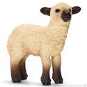 Owieczka Shropshire