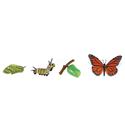 Cykl rozwój motyla