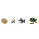 Cykl rozwoju żółwia