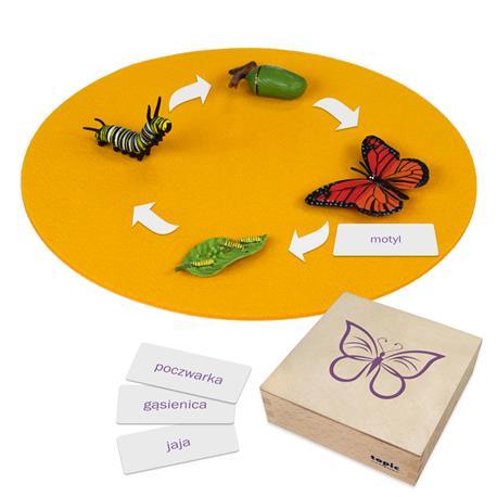 Rozwój motyla: figurki w pudełku, PL-3322