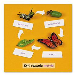 Rozwój motyla: karta kontrolna, PL-4689