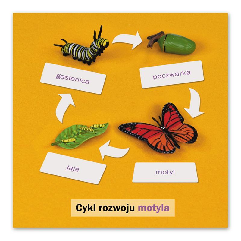 Rozwój motyla: karta kontrolna, PL