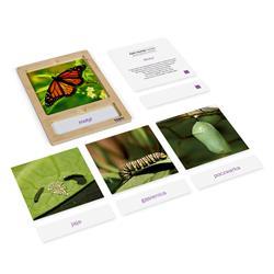 Rozwój motyla: karty z tacką, PL-3323