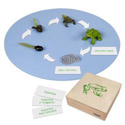 Rozwój żaby: figurki w pudełku, PL