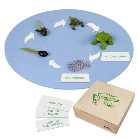 Rozwój żaby: figurki w pudełku, PL-3290