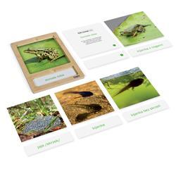 Rozwój żaby: karty z tacką, PL-3216