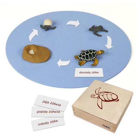 Rozwój żółwia: figurki w pudełku, PL-3291