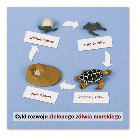Rozwój żółwia: karta kontrolna, PL-4691