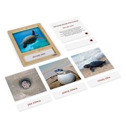 Rozwój żółwia: karty z tacką, PL-3217