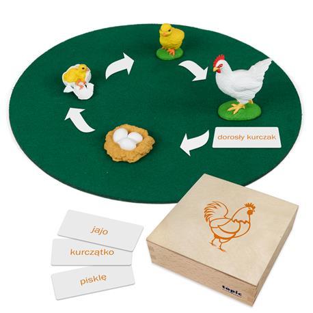 Rozwój kury: figurki w pudełku, PL-3292