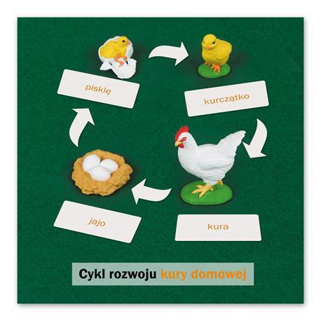 Rozwój kury: karta kontrolna, PL-5261