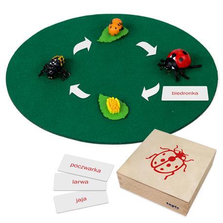 Rozwój biedronki: figurki w pudełku, PL-3293