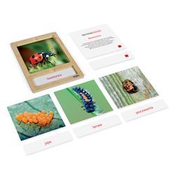 Rozwój biedronki: karty z tacką, PL-3219