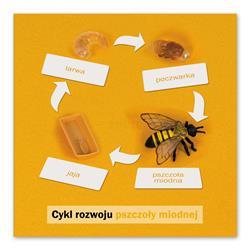Rozwój pszczoły: karta kontrolna, PL-4694