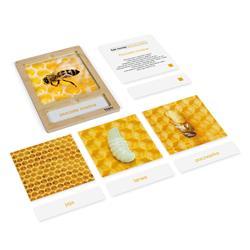 Rozwój pszczoły: karty z tacką, PL-4695