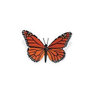 Cykl rozwój motyla: motyl-8163