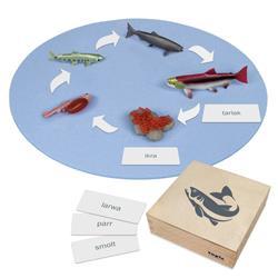 Rozwój ryby: figurki w pudełku, PL-9001