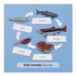 Rozwój ryby: karta kontrolna, PL-9147