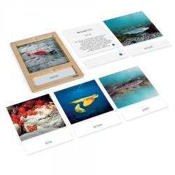 Rozwój łososia: karty z tacką, PL-9213
